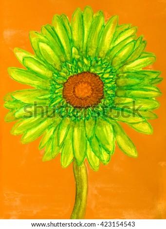 Green gerbera on orange background. - stock photo