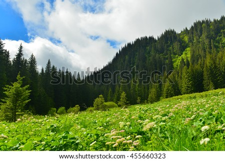 Green glade - stock photo