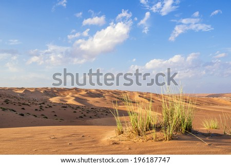 Green gras in desert Wahiba in Oman with clouds on blue sky - stock photo