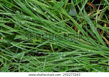 Green grass after the rain. Abstract raindrops rainy weather background. - stock photo