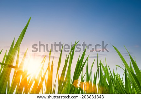 green grass against a dusk sky with sunset clouds  - stock photo