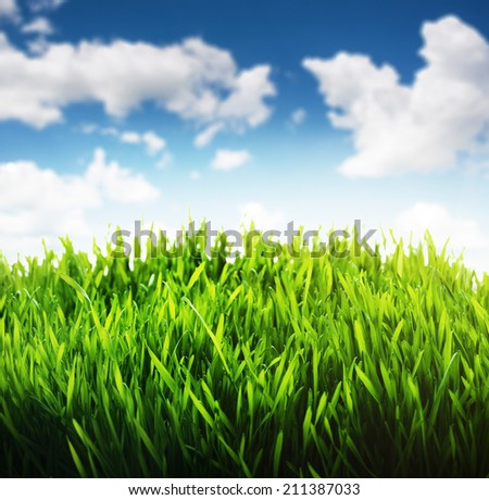 Green grass and blue sky scene background. Fresh rich growing green grass with the blue cloudy sky landscape background.  - stock photo