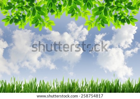 green grass and green leaves with blue sky background - stock photo