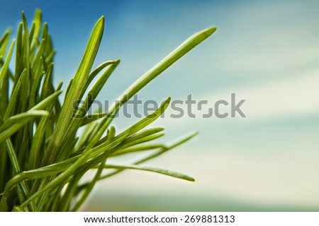 green grass and sky macro natural background - stock photo