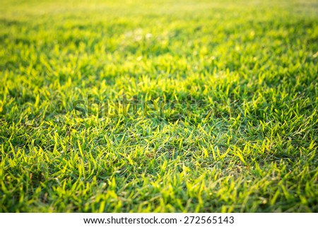 Green grass and sunlight. - stock photo