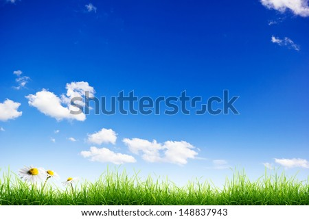 Green grass and white camomile flowers over a blue sky background - stock photo