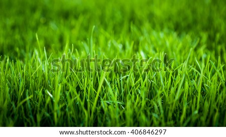 Green grass background image  - stock photo