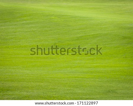 Green grass background texture - stock photo
