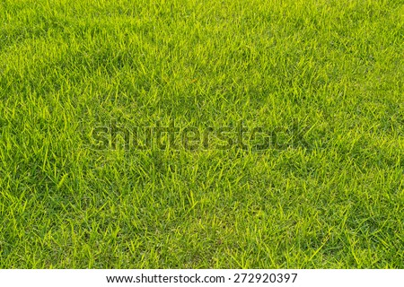 Green grass background texture. Element of design - stock photo