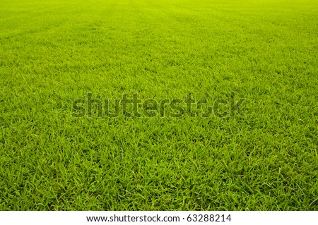 Green grass background  texture straight - stock photo