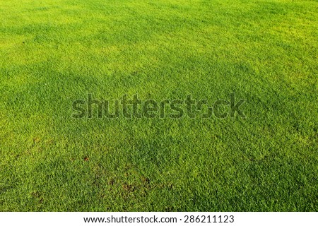 green grass background top view. - stock photo