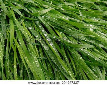green grass background with raindrops  - stock photo