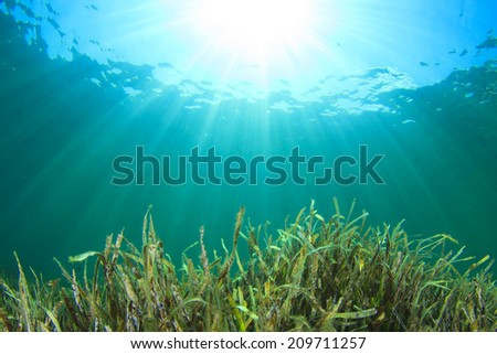 Green grass blue water sunshine - stock photo