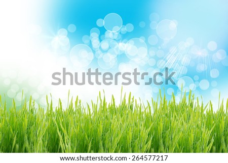 Green grass bright spring background - stock photo