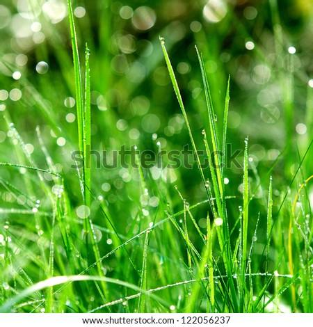 green grass close-up - stock photo