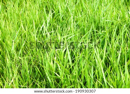 green grass close up background - stock photo