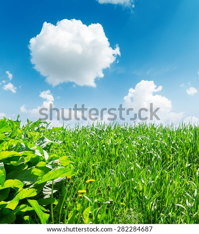 green grass closeup and deep blue sky with white clouds - stock photo