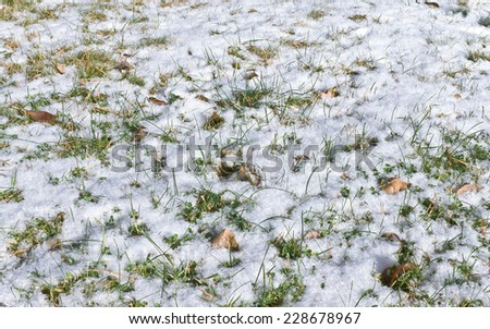 Green grass covered with first snow.Small depth of field - stock photo