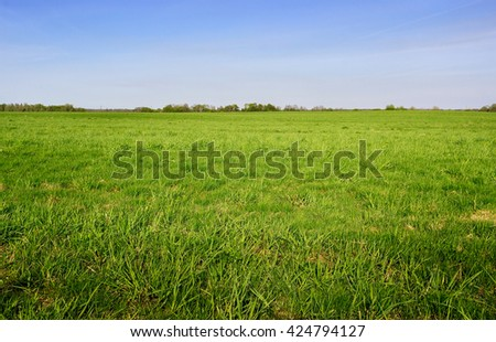 Green grass field and bright blue sky. Background. - stock photo