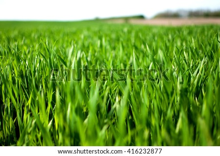 green grass field and bright sky - stock photo