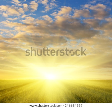 green grass field and dramatic cloudy sky at sunset - stock photo