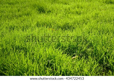 green grass field for background textured - stock photo
