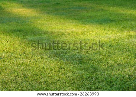 green grass field in perspective with sunlight spots - stock photo