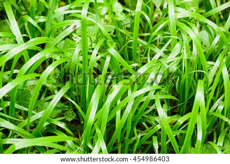 Green grass field natural background - stock photo