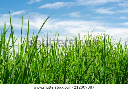 green grass field with blue sky background - stock photo