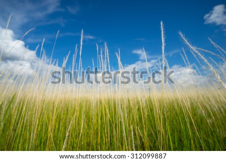 Green grass field with cloud and blue sky at Sarawak, Malaysia. - stock photo