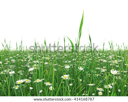 Green grass field with daisy flowers. Chamomile flowers in the lawn surrounded. isolated on white background. High resolution 3d illustration - stock photo