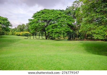 green grass field with tree background - stock photo