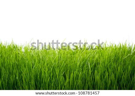 Green grass frame over white background - stock photo