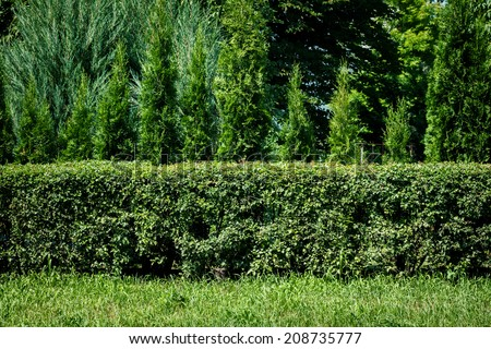 Green grass, green hedge and green trees background - stock photo
