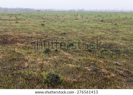 Green grass growing on the place of a fire - stock photo