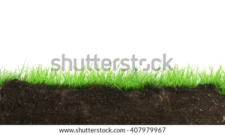 Green grass growth from ground on white background - stock photo