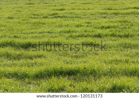 Green grass in a field - stock photo