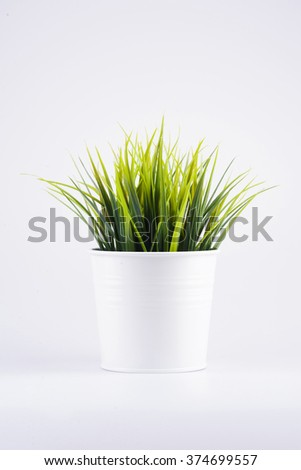 green grass in pot on white background - stock photo
