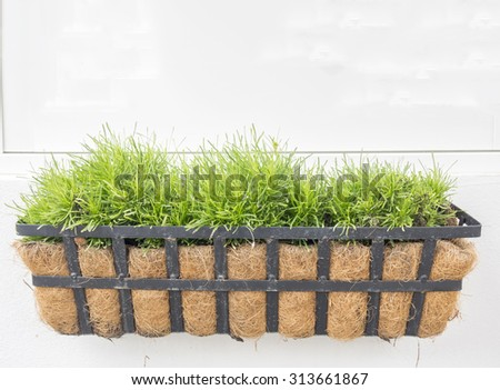 Green grass in pot on white wall. - stock photo