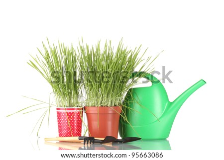 Green grass in two flowerpot on blue background - stock photo