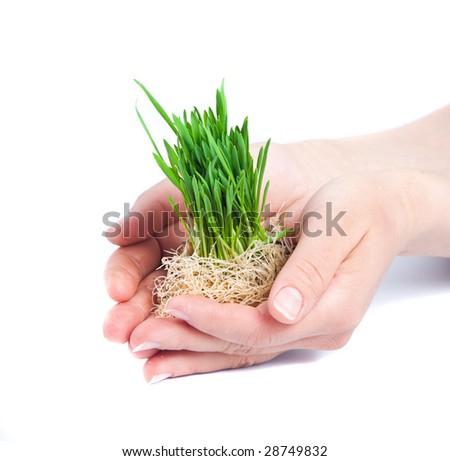 Green grass in women hands - stock photo