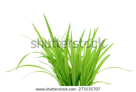 Green grass isolated on the white background - stock photo