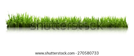 Green grass isolated on white background. Great for your design - stock photo