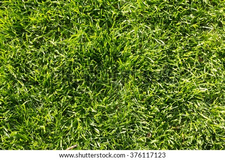 Green grass lawn top view - stock photo