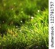 green grass macro close up - stock photo