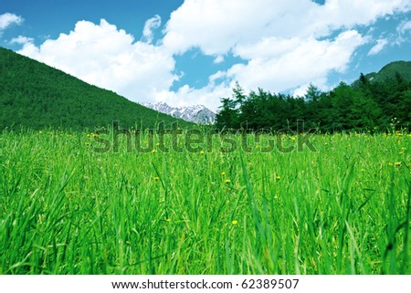 Green grass, mountains and forest below clouds. - stock photo
