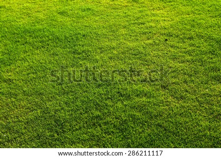 green grass .natural background texture. fresh spring green grass. - stock photo
