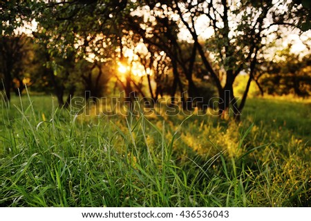 green grass on a background of trees and sunset. summer, calm, enjoy, relax, Outdoors - stock photo