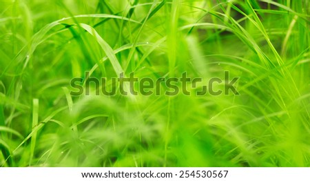 Green grass on a beautiful day. Shallow depth of field. - stock photo