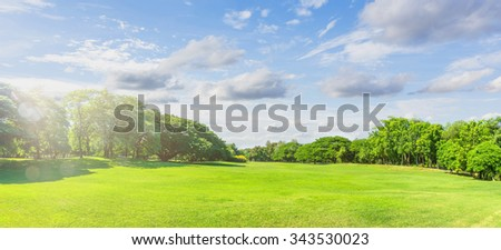 Green grass on a field (Panorama) - stock photo